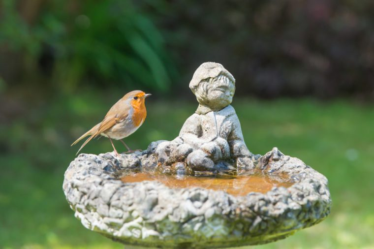 The European Robin [Erithacus Rubecula] perched on a birdbath. Taken on the South coast of England.