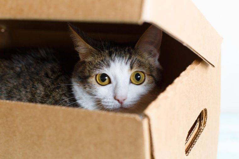 The cat hides in the box, white background, close-up
