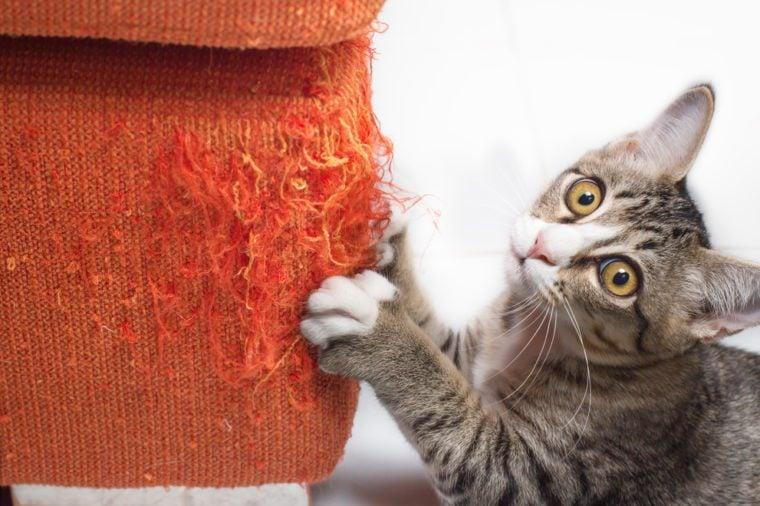 Kitten scratching orange fabric sofa