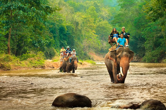 CHIANG MAI / THAILAND - JAN 12,2018: tourist riding on elephants Trekking in Thailand Young tourists are riding on elephants through the jungle in national park Maetaman Elephant Camp