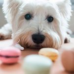11 Summer Foods You Should Never, Ever Share with Your Dog