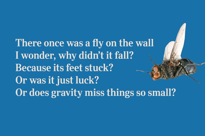 Fly limerick for kid