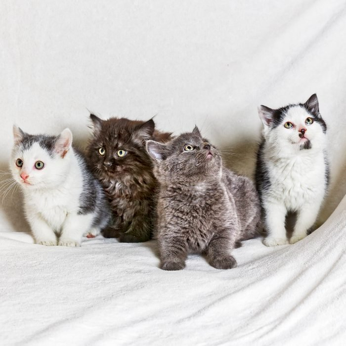 Four cats on a white sheet