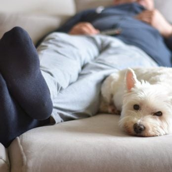 14 Things You Do That Your Dog Actually Hates