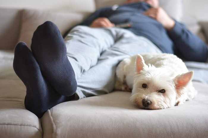 home comfort when watching TV - dog from the shelter