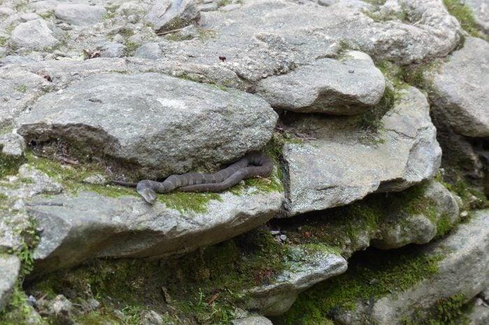 Snake hiding among the rocks, Northern Water snake (Nerodia sipedon)