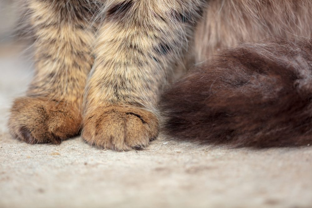 Paws on the cat on the ground