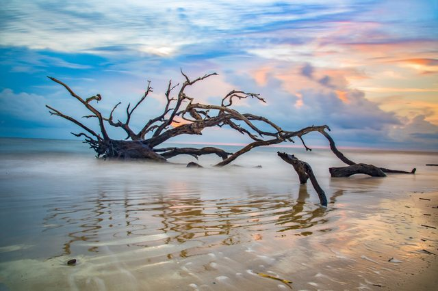 Driftwood Beach sunrise in Jekyll Island, Georgia, GA, USA.
