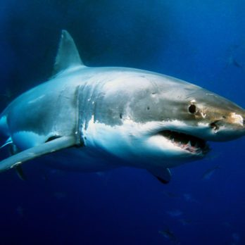 13 Fascinating (and Reassuring) Facts About Sharks