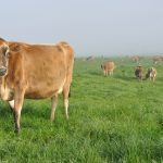 The Weird Reason Queen Elizabeth II's Cows Use Waterbeds