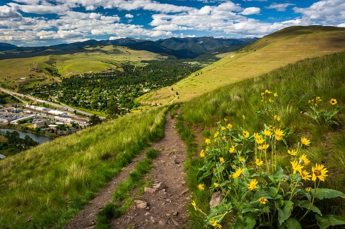 Trail and flowers on Mount Sentinel, in Missoula, Montana.