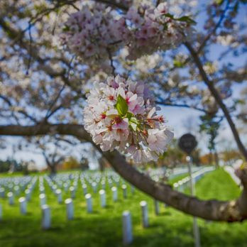 17 Things You Never Knew About Arlington National Cemetery