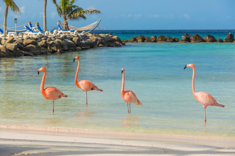 Four flamingos on the beach