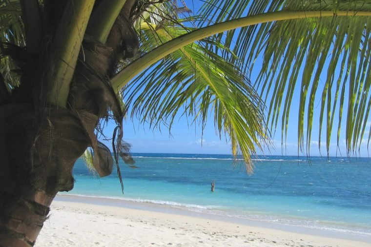 Palm tree and blue sea from Nattes island - Nosy Boraha - Sainte-Marie island - Madagascar.