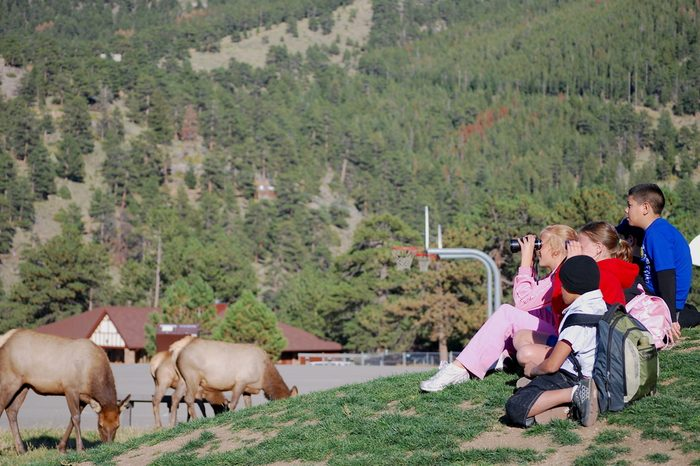 Estes Park, Colorado, USA - September 24, 2008: School children watching elks that came into their school compound after class.