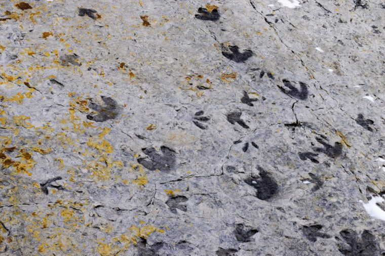 Fossilised dinosaur footprints, Dinosaur Ridge, Colorado, USA