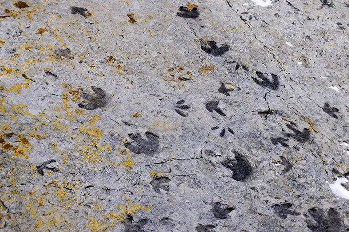 Fossilised dinosaur footprints, Dinosaur Ridge, Colorado, USA