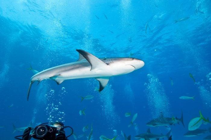 Reef_Shark_in_Nassau_Bahamas