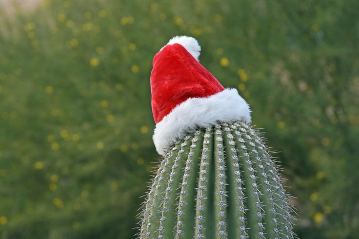 Saguaro cactus with santa hat during daytime