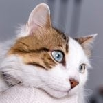 14 Cat Health Symptoms You Should Never Ignore