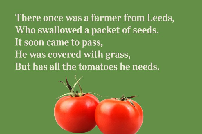 Tomatoes limerick for kids