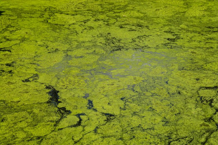green algae patterns on the water