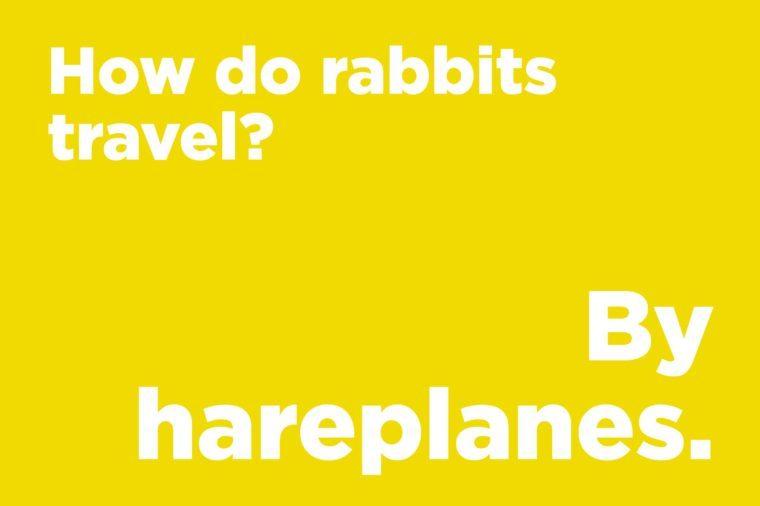 rabbits travel