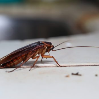 The Subtle Sign Your House Could Be Infested with Cockroaches
