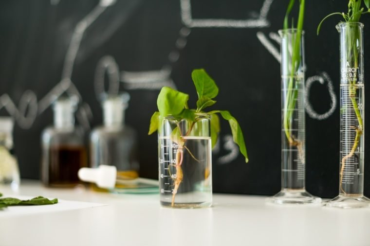 Plant in laboratory