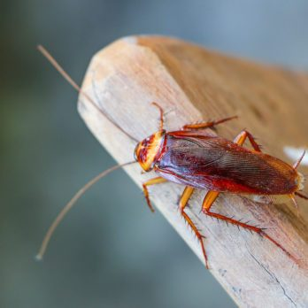 This Is the Most Roach-Infested City in America