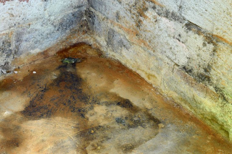 Water damage and mold in basement. Horizontal image