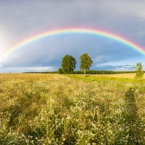 Rainbow over a field of wheat