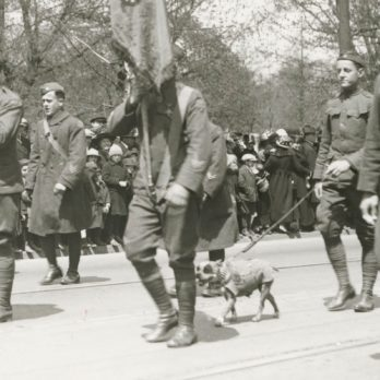 The Bravest Dogs in History