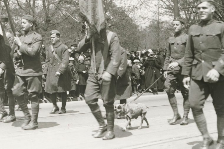 This photograph provided by the Connecticut State Library shows famed war dog Stubby walking in a homecoming parade for World War I veterans in Hartford, Conn. Stubby is the subject of a new animated movie being released on April 13, 2018