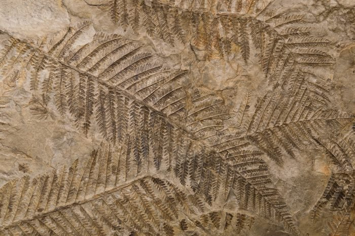 Petrified prehistorical ferns frond imprint on stone with plants branches and leaves