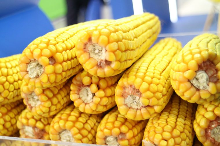 Image of corn cobs.
