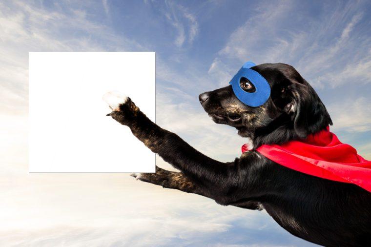 Super Hero Dog Flying
