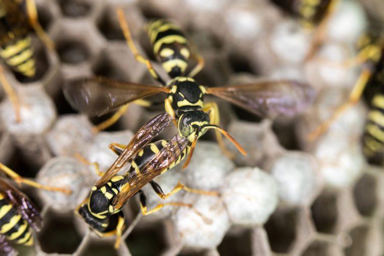 wasp on hives. close