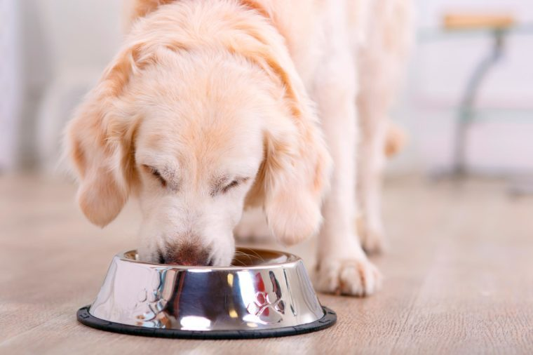 Nice taste. Close up of beautiful dog eating from the bowl