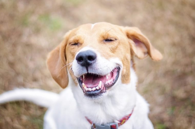 Happy Smiling Dog