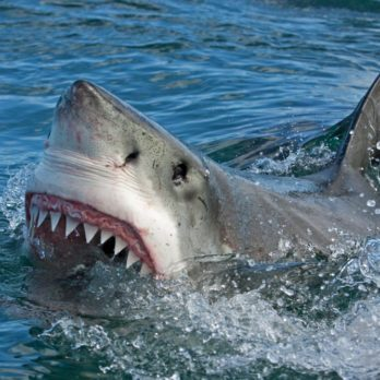 Here's How I Survived a Shark Attack