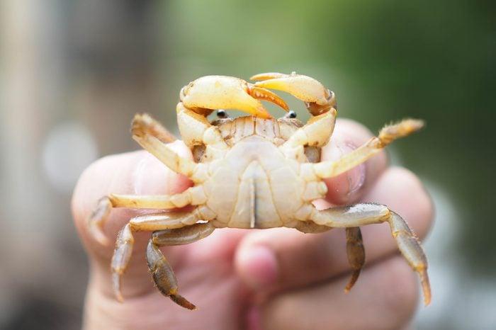 Crab Crab Crab