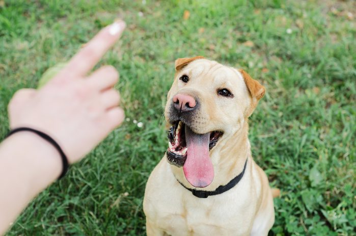 Women's or owner's hand trained dog, closeup