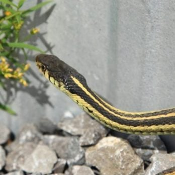 Here's How to Keep Snakes out of Your Home