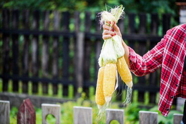 Casual young woman holding corn cob in backyard organic garden