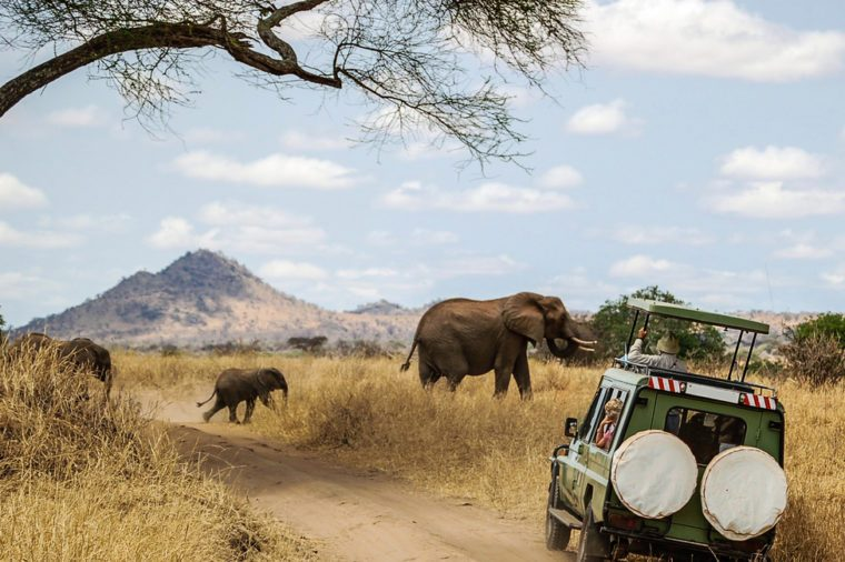 Watching Elephants on Safari