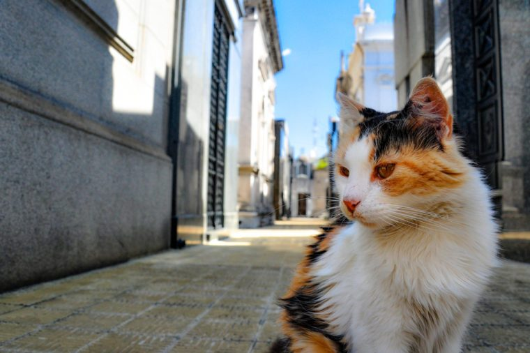 Feral Cat at Recoleta Cemetery