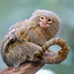 20 of the Cutest Tiny Animals from Around the World