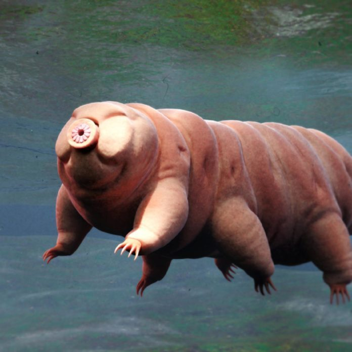 The Strangest Animal Found in Each State