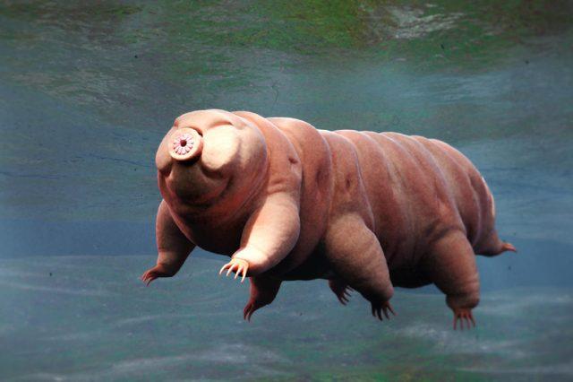 tardigrade, swimming water bear, 3d render